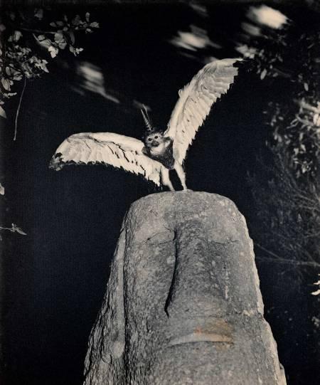 ©Joan Fontcuberta, Cercophitecus, dalla serie Fauna, 1985